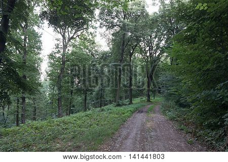 Forest Path Summer Forest with Green Leafs Pathway through the Summer forest Trees Woods. Sunlight In Forest. Summer Nature.  Environment concept.
