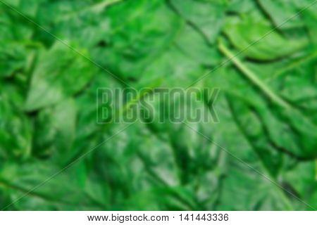 Fresh Green Spinach Blur Unfocused Texture Background