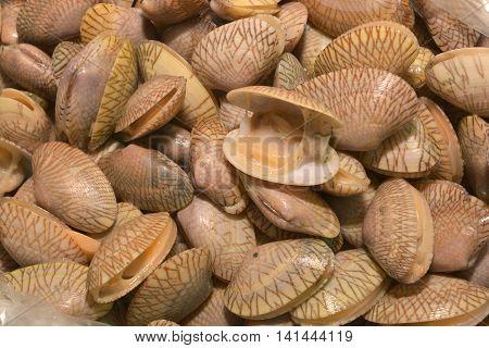 Surf clam Short necked clam Carpet clam Venus shell Baby clam