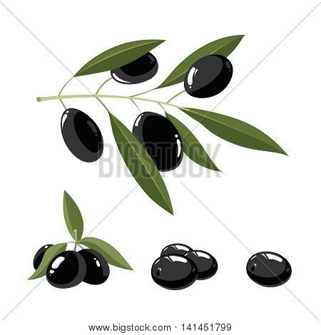 vector illustration set of black Olives with leafs isolate on light background. Pictures for your personal design project.