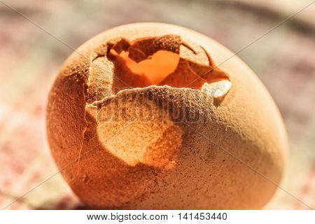 Nice cracked chicken egg close-up in sunny rays