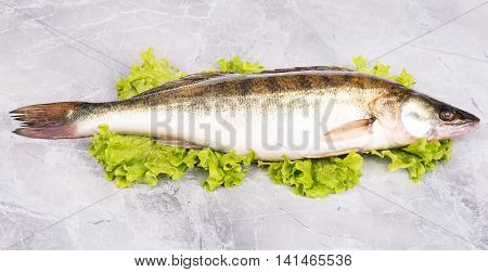 Fresh pike perch on the green lettuce leaves over table-top background