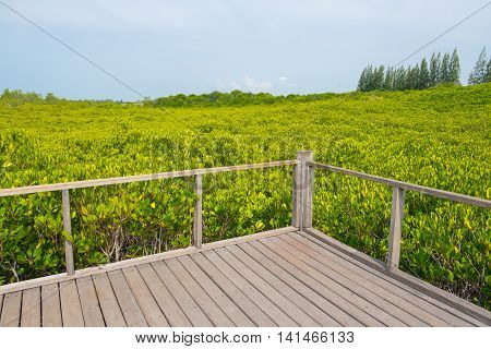 Wooden balcony surrounded with Ceriops Tagal field in mangrove forest located at Rayong Thailand. This attraction called