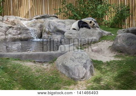 Panda Enclosure At The Toronto Zoo, Enjoy The Sun On The Rocks Near The Pool