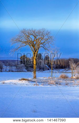A scene of a lone tree standing firm in a field in Wisconsin.