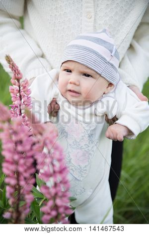 Baby touching and smelling lupins flowers on mother's hands
