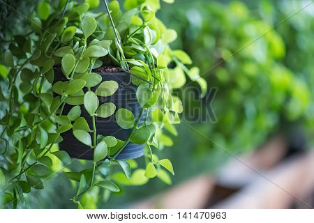 Close up of green plant in plastic flower pot hanging on vertical garden board