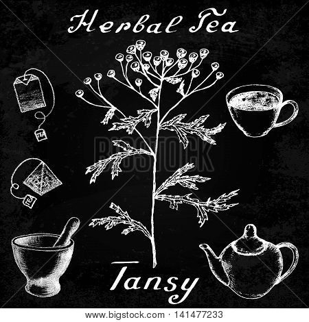 Tansy hand drawn sketch botanical illustration. Vector drawing. Herbal tea elements - cup teapot kettle tea bag bag mortar and pestle. Medical herbs. Lettering in English. Effect chalk board