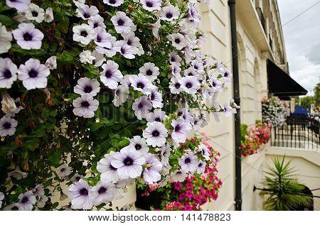 beautiful flowers in a certain London street