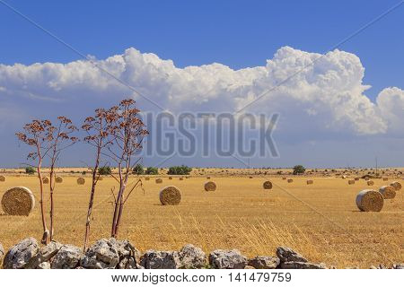 Summer landscape.Alta Murgia Nationa Park:straw bales in harvested corn fields. - (Apulia) ITALY