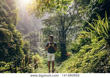 Man Hiking In Lush Rainforest