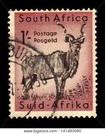 South Africa - CIRCA 1954: a stamp printed in the South Africa shows greater kudu (tragelaphus strepsiceros), series south african wildlife, Kruger Park, circa 1954