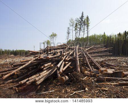 Pile of logs in a forest located in Saskatchewan Canada