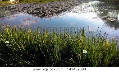 Lago, céu, espelho d'água, flor, Expoville, natureza,