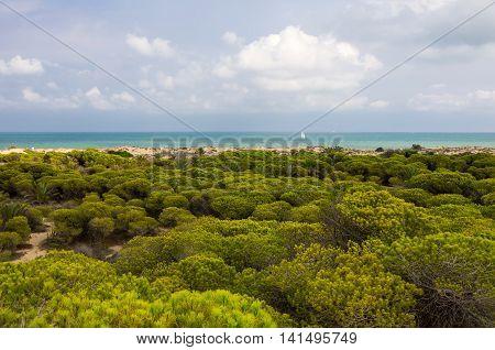 Dunes de La Marina on the coast of Mediterranean sea Costa Blanca Spain