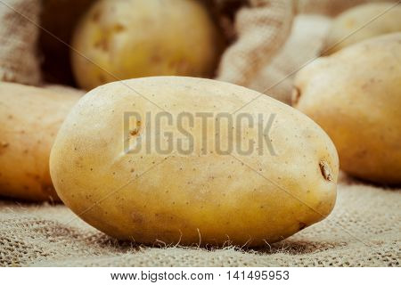 Closeup Fresh Organic Potatoes On Hemp Sack Background. Fresh Harvested Potatoes On Hemp Sack Backgr