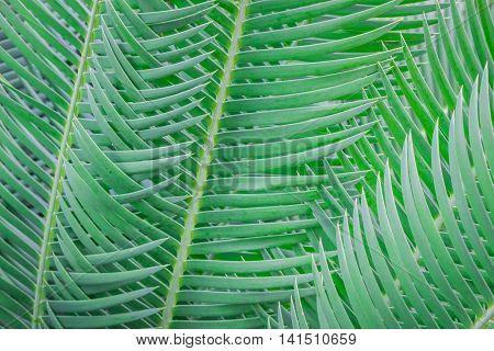 Palm leaves arranged beautifully in the forest.