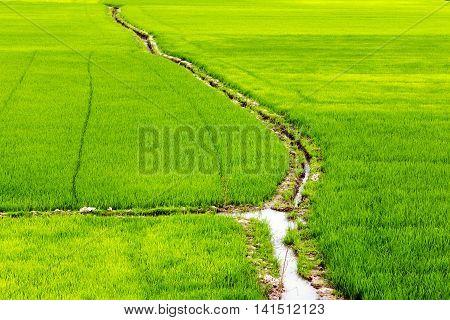 Rice Fields Channel