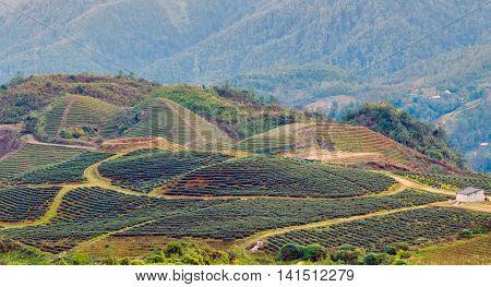 Hill Sa Pa. Lao Cai Vietnam