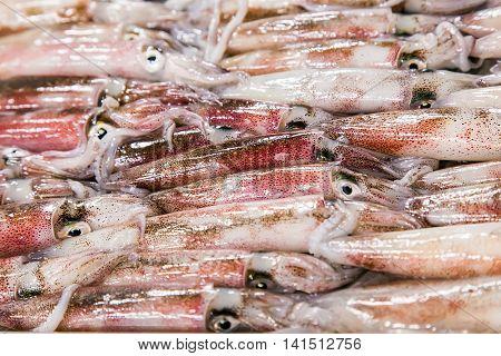 Raw Squid Background