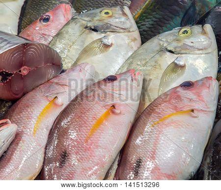 Fish Seafood On Ice