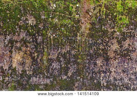 Moss Wall Texture