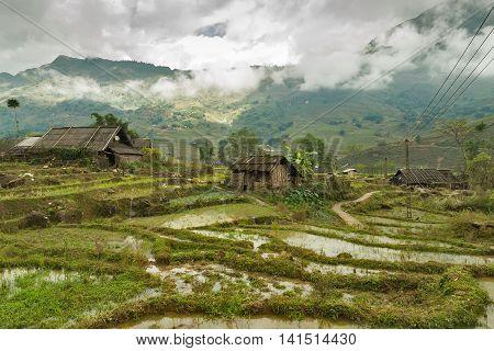 Rice Field And Hut. Vietnam
