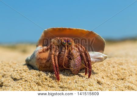Snail Crab On A Sand