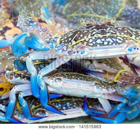 Blue Crab Market