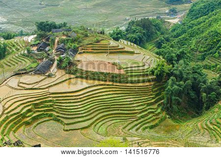 Rice rural field terraces at Sapa Vietnam. outdoor activity on tropical summer vacations