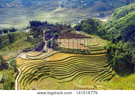 Village Agriculture Terraced Rice Field Hill