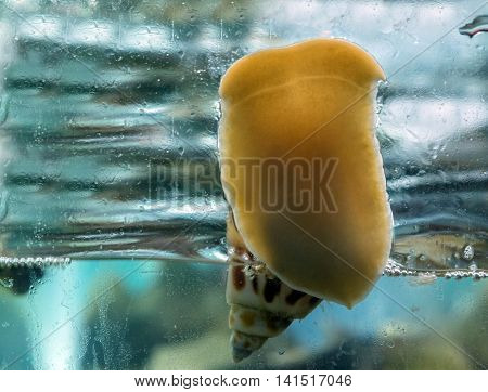 Snail On A Glass Surface With Water Drops