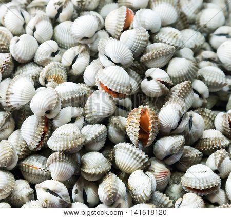 Sea Food Raw Surf Clam Background