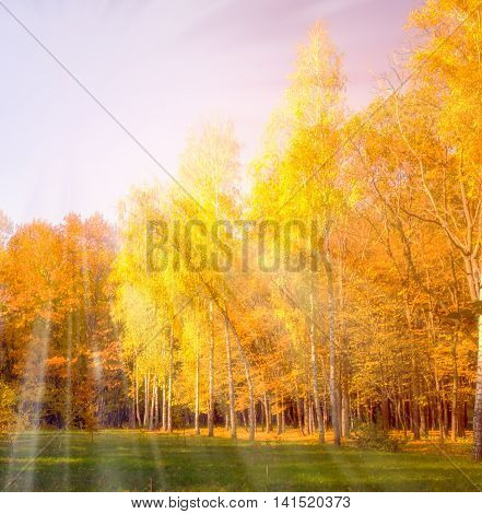 Sunset Falls Color Forest Fall scene. Beautiful Autumnal park. Beauty nature scene. Autumn Trees and Leaves