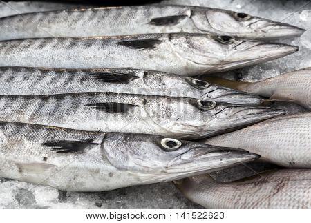 Fresh Raw Fish On Ice At Street Market