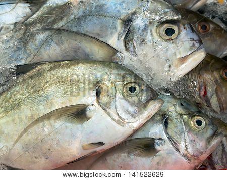 Raw Fish Street Market