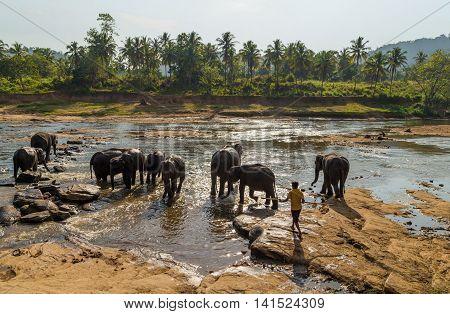 Safari Elephant Orphanage, Sri Lanka