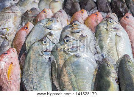 Fresh Cool Fish On Ice At Street Market