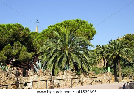 Palm In The Park Guell