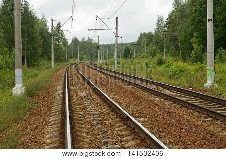 Railway tracks for trains through a dense array forest.
