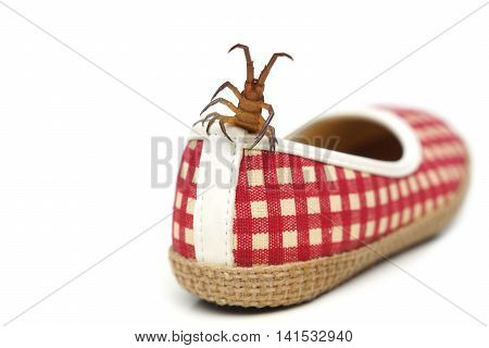Centipede getting in a shoe / The danger of poisonous animal concept