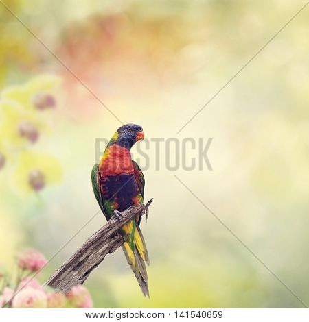 Rainbow Lorikeet Perched on a branch