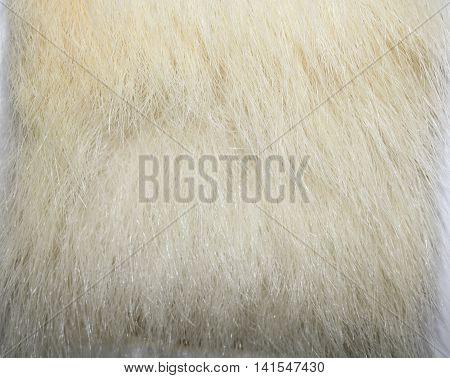 The fur of a polar bear, and north, oshkuy, Nanook, Umka (Ursus maritimus - «sea bear
