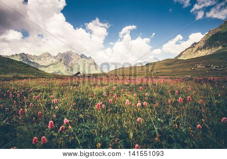 Green valley knotweed flowers and blue sky idyllic Landscape in Abkhazia with mountains on background Summer Travel serene scenic view
