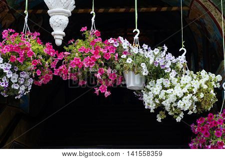 Lots of flowers in pots in the Tolga Convent of the Presentation of the Blessed Virgin, which is located near Yaroslavl, Russia.