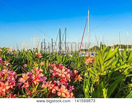 Pink flowers and yachts masts. Mobile photo. Selective focus image