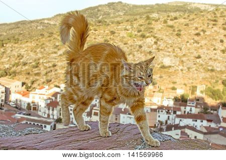 Tabby Red cat going on a wall at the height on the mountains background. Selective focus image