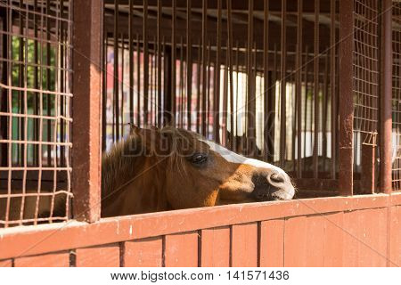 Brown horse standing in the paddock head on the gate and looking into the distance with sadness and sorrow