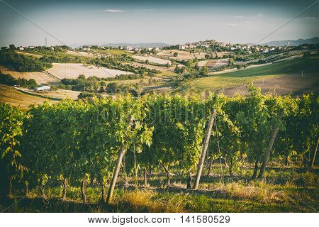 Vineyard fields in front of Morro d'Alba in Marche Italy in vintage style