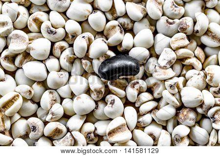 adlay millet and black beans grain healthy food